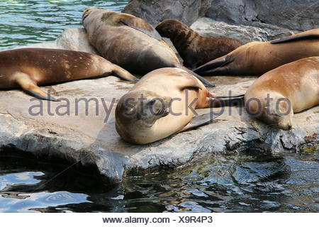 mammal conservation of nature - Stock Photo