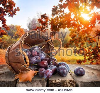Plums in a basket on wooden table and autumn landscape. - Stock Photo