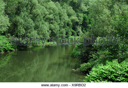 auwald an der ruhr in arnsberg - Stock Photo