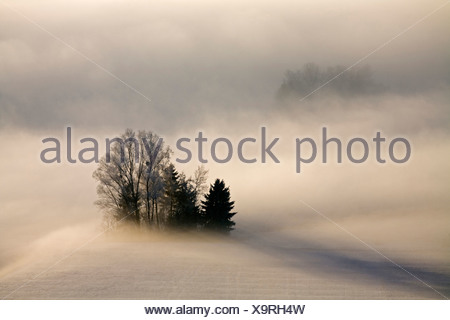 Germany, Bavaria, Murnau, Misty landscape - Stock Photo