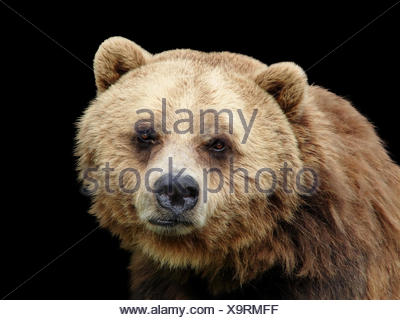 big large enormous extreme powerful imposing immense relevant animal mammal - Stock Photo