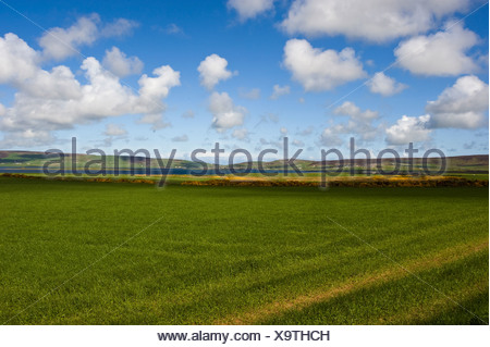 Meadow with clouds in the sky, Orkney Islands, Scotland, United Kingdom, Europe - Stock Photo