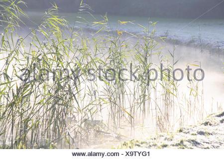 Germany, Bremen, civil park, swan pond, winter, - Stock Photo