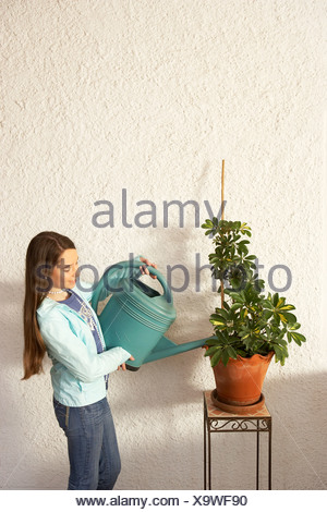 Girl (12-14) watering pot plant - Stock Photo