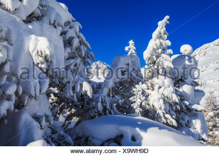 The winter sun shines on the snow covered woods and the landscape around Maloja Canton of Graubünden Engadine Switzerland Europe - Stock Photo