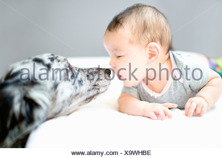 Baby girl face to face with pet dog - Stock Photo