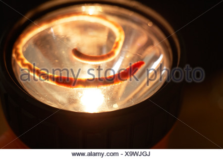 A worm on torch light - Stock Photo