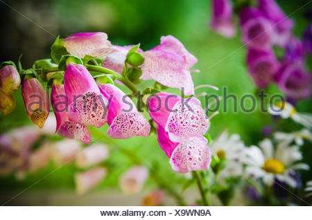 Bouquet of beautiful summer flowers, close-up - Stock Photo