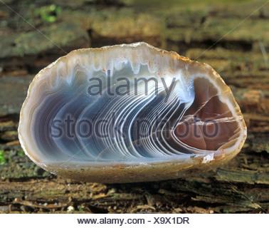 Agate, cut, from Botswana - Stock Photo