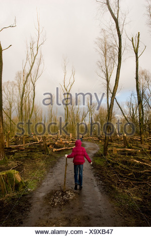 Wandeling in gehavend bos Oostvaardersplassen - Stock Photo