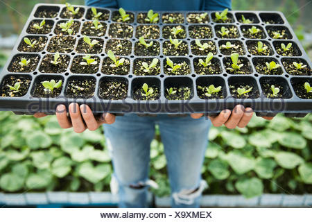 Female farmer holding tray of plant seedlings - Stock Photo