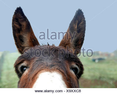 Close-Up Of Donkey On Field Against Sky - Stock Photo