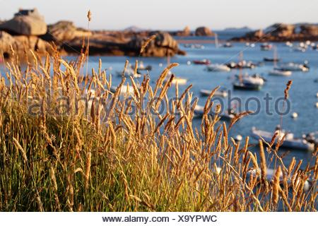 Boats anchored in the harbor, Tregastel, Brittany, France - Stock Photo