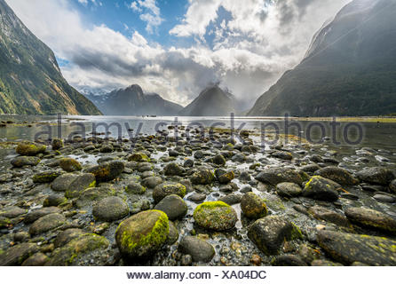 Moss covered stones, Miter Peak, Milford Sound, Fiordland National Park, Te Anau, Southland Region, Southland, New Zealand - Stock Photo