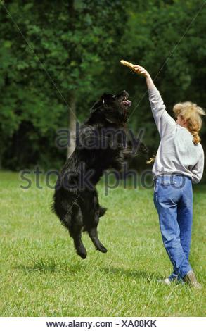 WOMAN PLAYING WITH NEWFOUNDLAND DOG - Stock Photo