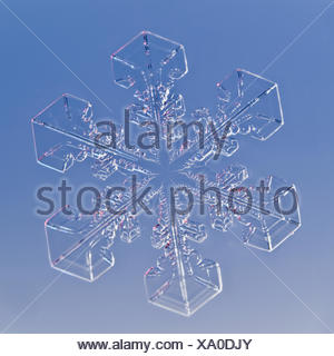 Snowflake magnified under microscope, Lilehammer, Norway - Stock Photo