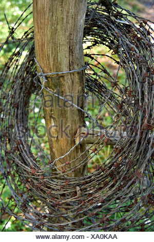 Close-up of barbed wire fence around the wooden pole - Stock Photo