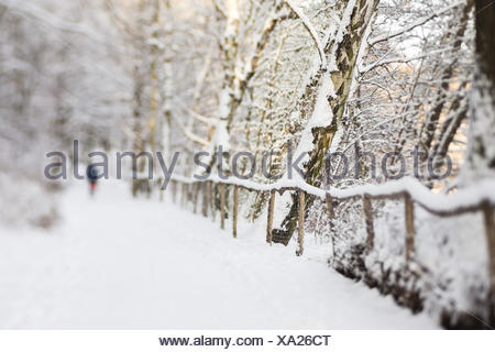 hiking in a forest with snow - Stock Photo