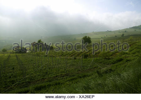 Morning in the vineyard Barolo, Piedmont, Italy - Stock Photo