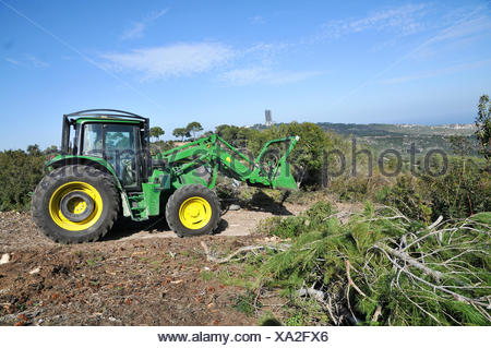 Forestation work at the Carmel forest - Stock Photo