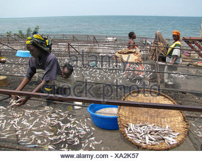 women are sorting out fish which has been captured by fishermen in the Lake Kivu, Rwanda, Gisenyi - Stock Photo