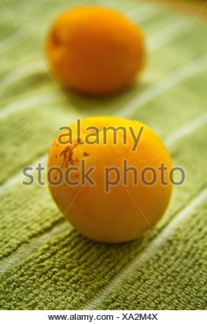 Fresh apricots - Stock Photo