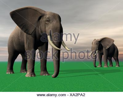 elephants - Stock Photo