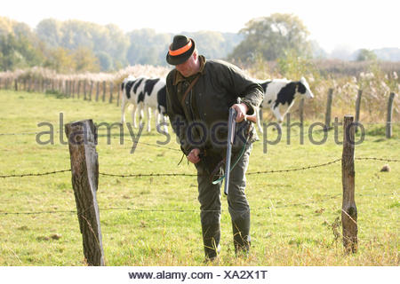 hunter climbing over the barbed wire fence at a pasture, Germany - Stock Photo