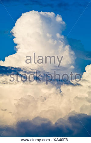 White thunderhead clouds billow into the sky as a storm brews above the Amazon rainforest. - Stock Photo