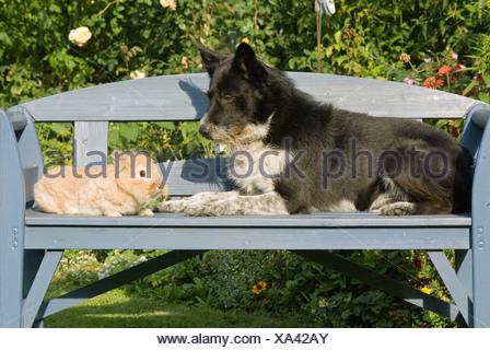 animal friendship: half breed dog with rabbit - Stock Photo