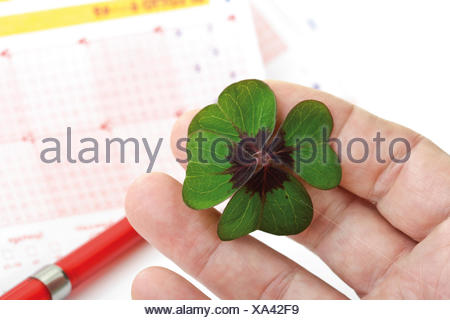 Hand holding four-leaf clover in front of lottery tickets - Stock Photo