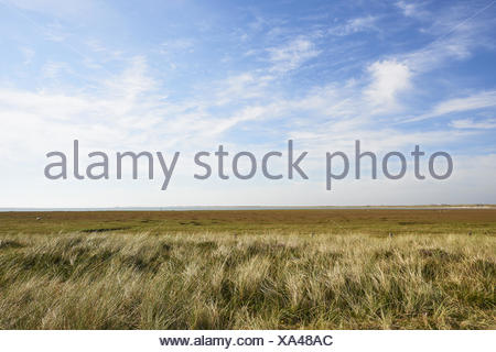 sylt - Stock Photo