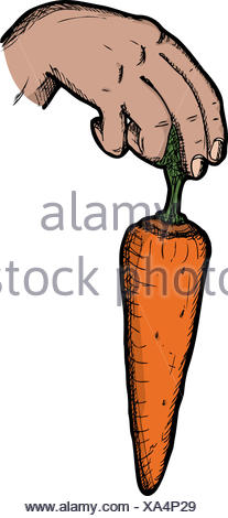 hand, hold, carrot, dangle, payola, bribe, hand, isolated, model, design, - Stock Photo