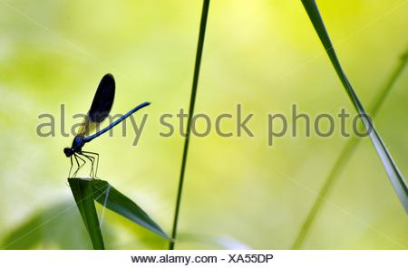 Swadow of a dragonfly sitting on leaf. - Stock Photo