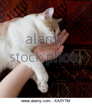 A sleeping cat. - Stock Photo