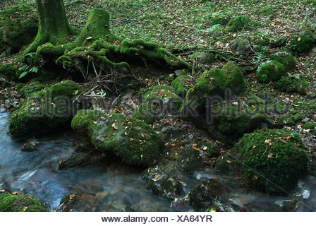 Tabarz, Germany, a stream in the Thuringian Forest Nature Park - Stock Photo