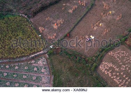 Aerial photo at harvest season, rice harvest, Yangshuo, Guilin, Guangxi, China, Asia - Stock Photo