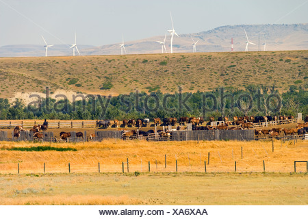 Work horses and Wiind turbines, Pincher Creek, Alberta, Canada, energy, Wind Energy, Alternate Energy - Stock Photo