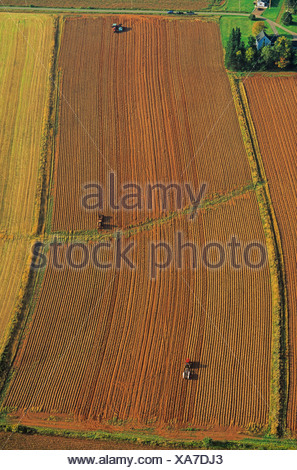 Aerial of a potato field during harvest. Tryon, Prince Edward Island, Canada. - Stock Photo