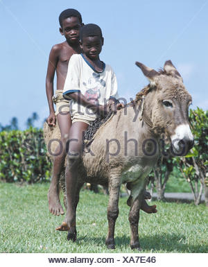 The small Antilles, Grenada, boy, locals, two, sit, ride donkey the Caribbean, West-Indian islands, the small Antilles, islands about the wind, Caribbean Sea, island, children, brothers, non-whites, young persons, view camera, - Stock Photo