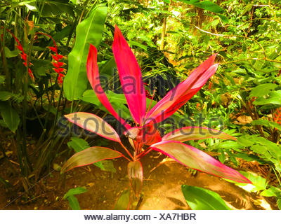 Close up of Coleus leaves - Stock Photo