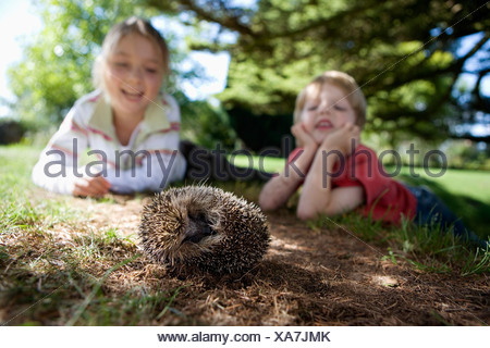 Boy 4 6 and girl 7 9 lying on grass in garden watching hedgehog smiling surface level focus on foreground tilt - Stock Photo
