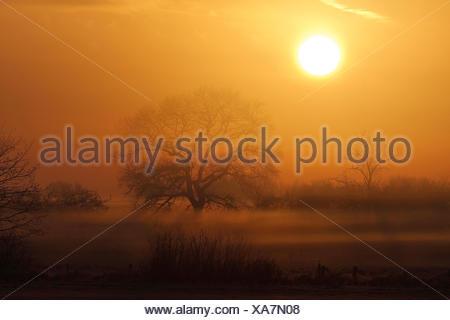 morning mist over marsh meadow at sunrise, Germany, North Rhine-Westphalia - Stock Photo