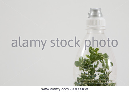 A plant growing in a bottle - Stock Photo