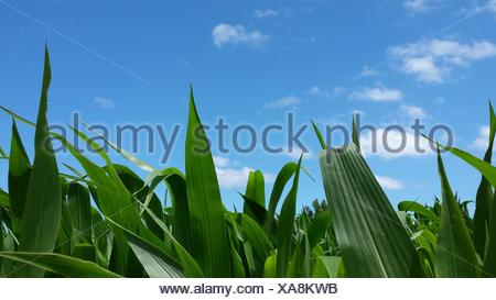 Close-Up Of Grass Against Blue Sky - Stock Photo