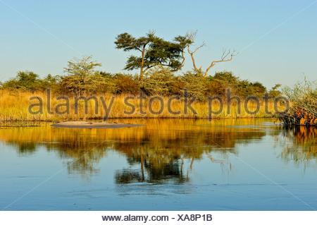 Africa, Bwa Bwata, National Park, Caprivi, Namibia, grasslands, horizontal, savannah, sunny, tree, water, watering hole - Stock Photo