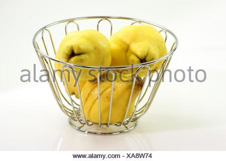 quince fruit basket - Stock Photo