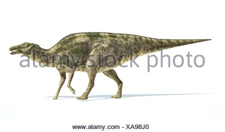 Maiasaura dinosaur, full body photorealistic representation, scientifically correct. Side view, On white background and drop shadow. Clipping path - Stock Photo