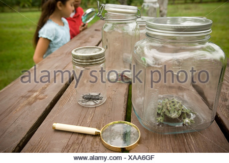 Jars with Insects, Kids Looking through Magnifying Glass - Stock Photo