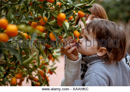 Mother and daughter smelling oranges on tree - Stock Photo